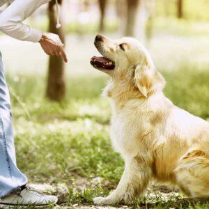 Aprende las técnicas de adiestramiento con este Máster en Adiestramiento Canino.