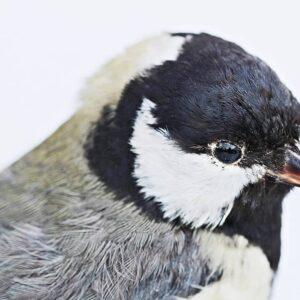 Con el Máster en Taxidermia estudiarás el proceso de disecado de animales exóticos, mamíferos y aves.