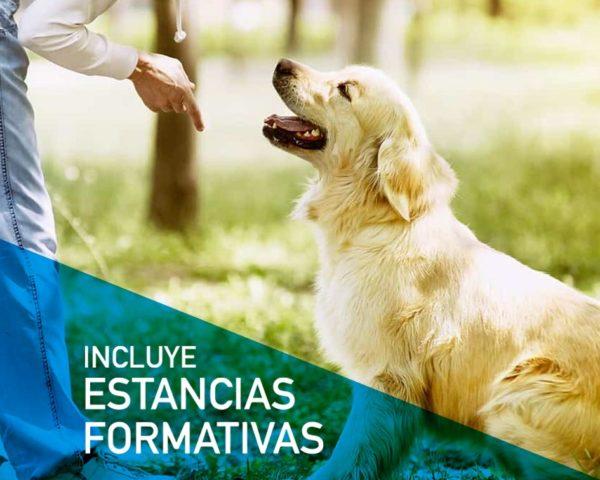 Estudia online el Máster en Adiestramiento Canino