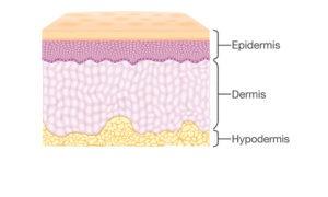 Tenemos tres capas de la piel, la epidermis, la dermis y la hipodermis. El tatuaje se hace en la dermis.