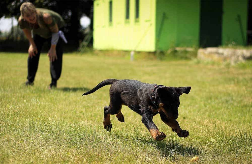 Educador canino: quién es y cómo trabaja