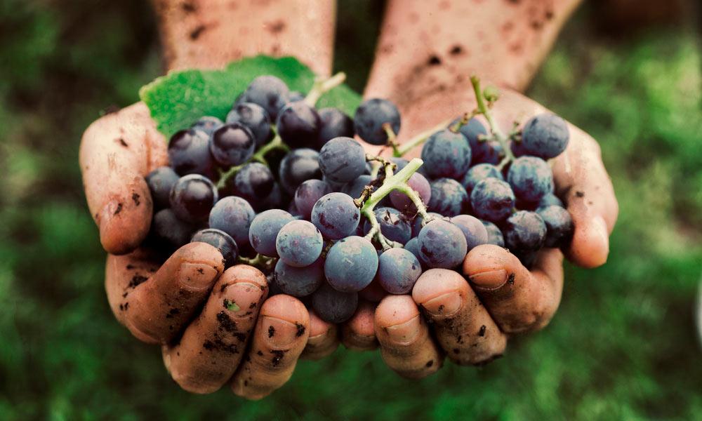 Todo lo que debes saber sobre la elaboración del vino