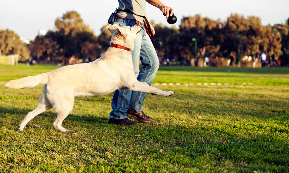Técnicas básicas para un entrenador de perros
