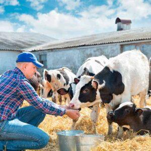 Estudia el Máster en Ganadería y aprende los cuidados esenciales de los animales de granja.