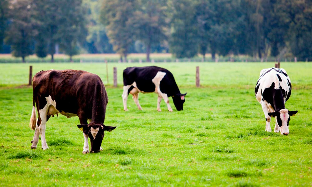 Conoce más sobre las ventajas de la ganadería ecológica