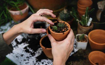 El huerto urbano, lo último en jardinería