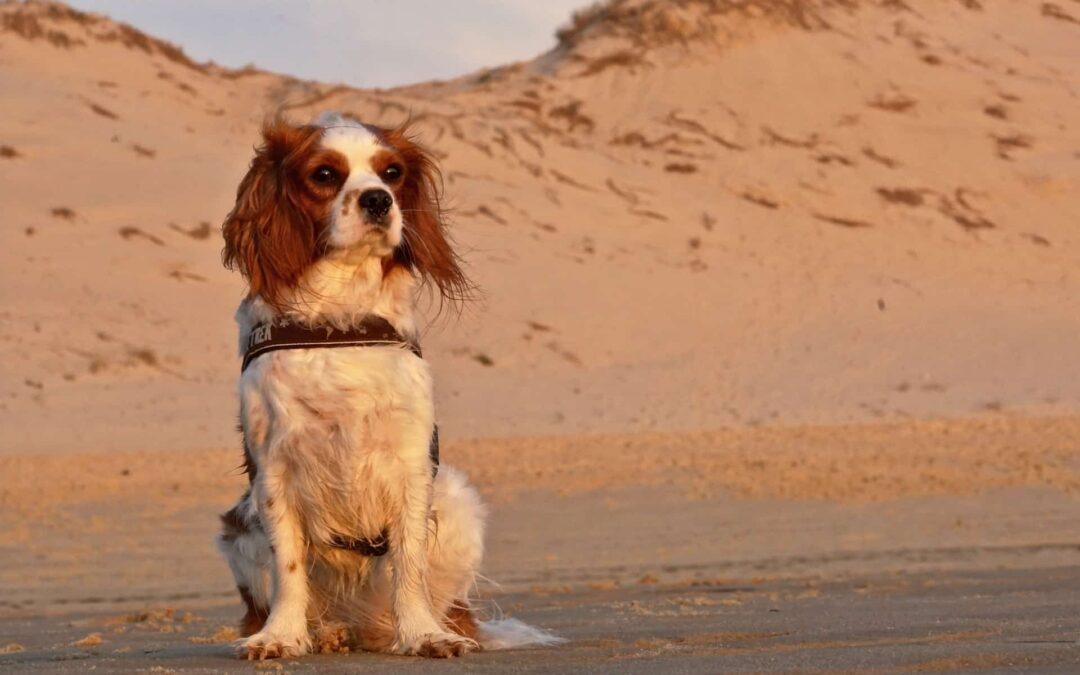 Perros en adopción: ¿qué opciones hay?